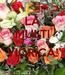 Poster: LA MULTI ANI VIORICA!