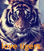 Poster:     love tigers