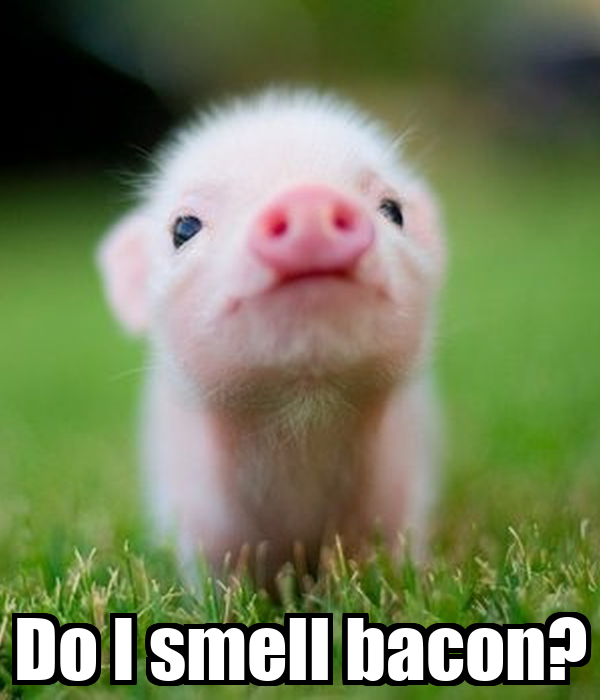 Vaginal odor smells bacon