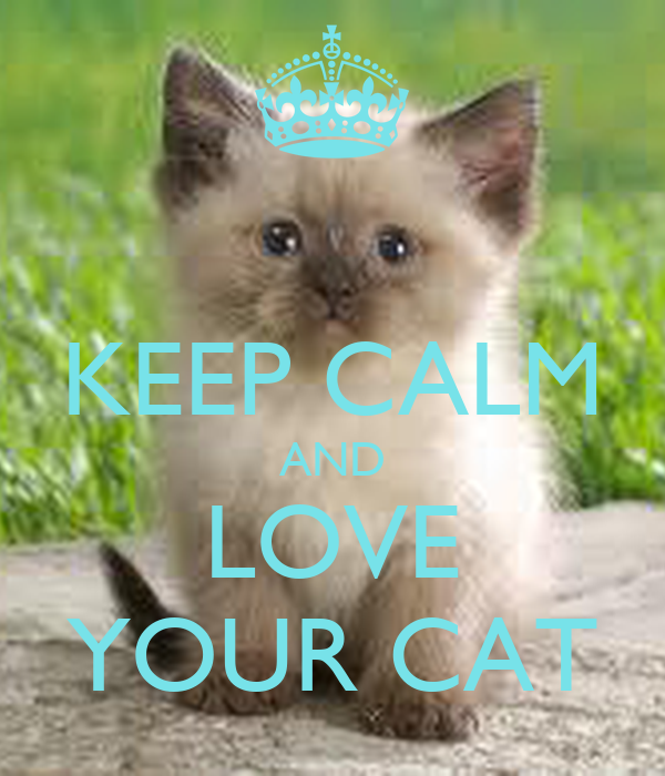 Keep Calm And Love Cats Poster Keep Calm And Love Your Cat