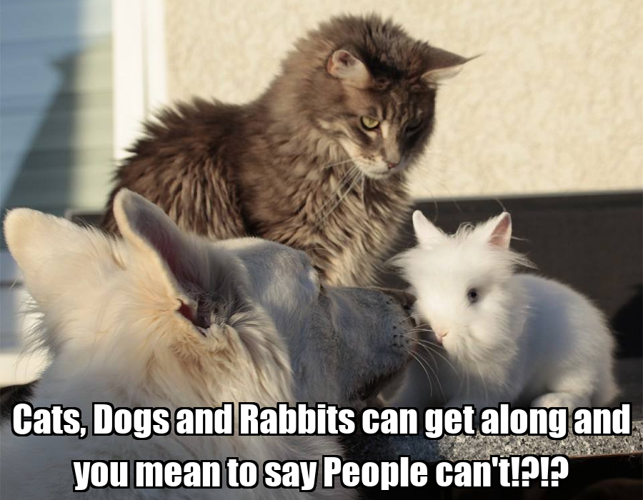 9 Ways to Help Cats and Dogs Get Along Better | Catster