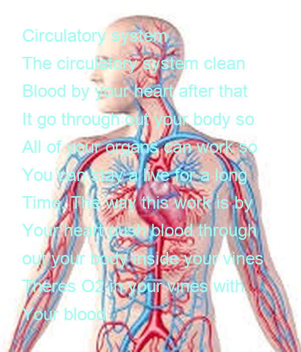 Circulatory system The circulatory system clean Blood by your heart ...
