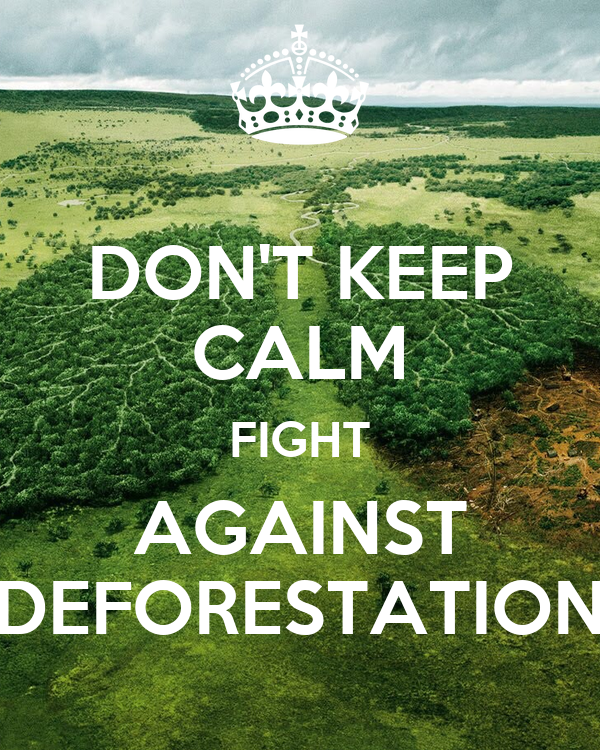how to help fight deforestation in the amazon
