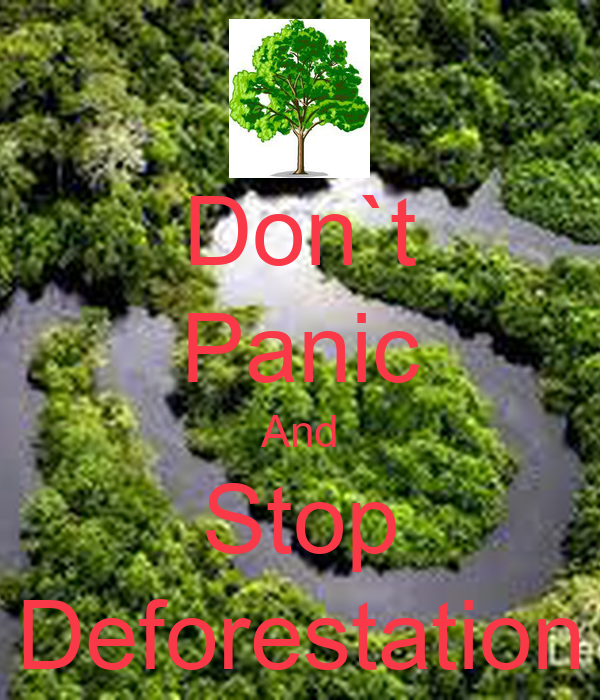 how can we prevent deforestation What can be done to slow deforestation  and improving already developed lands we can diminish the need to clear  important updates on amazon conservation.