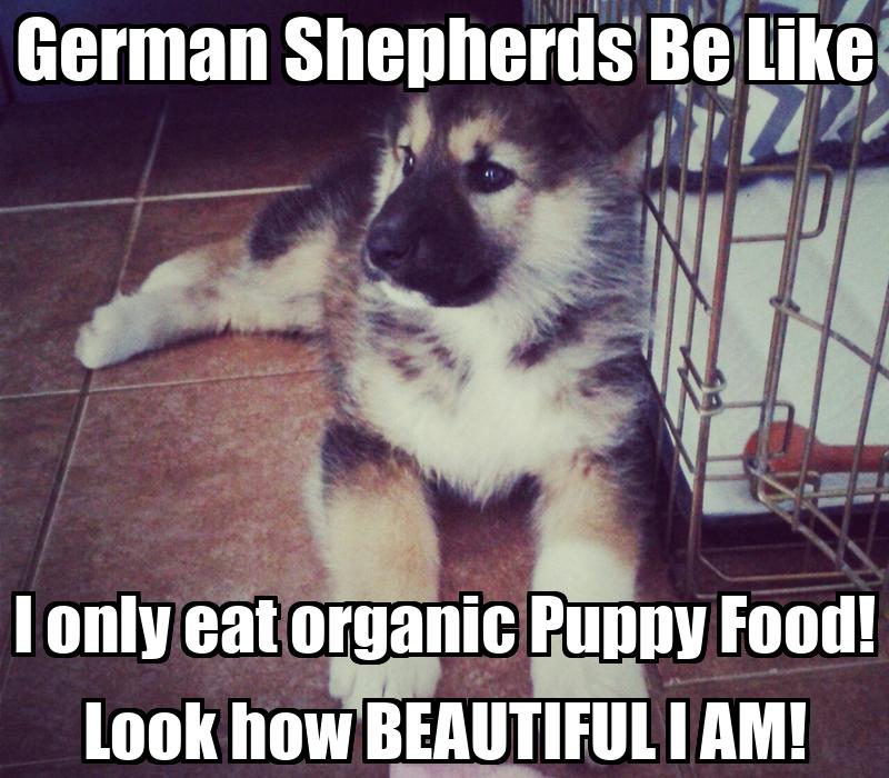 Funny Meme German : German shepherd meme