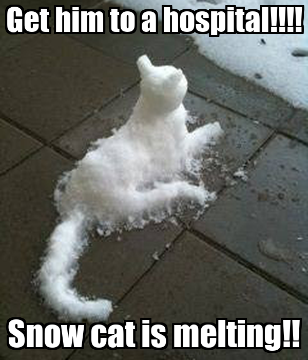 Grumpy Cat Snow Meme Loft Wallpapers