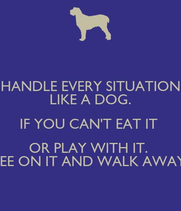 Dog Like To Keep Away