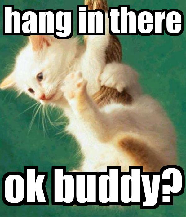 Tank Cat Meme