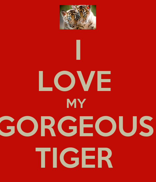 i love my gorgeous tiger keep calm and carry on image