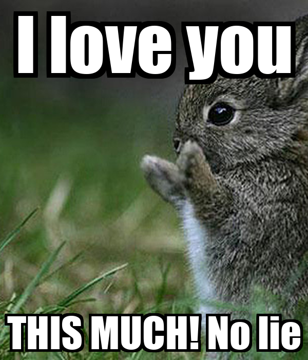 I Love You Meme: I Love You THIS MUCH! No Lie Poster
