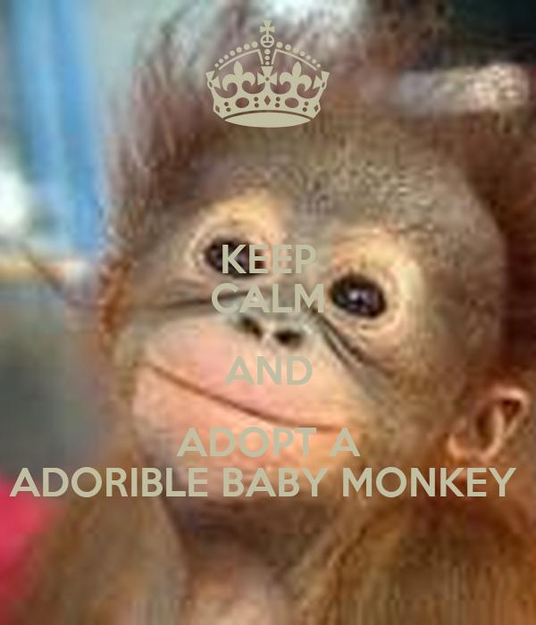 keep calm and adopt a adorible baby monkey
