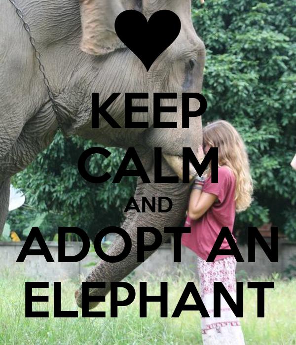 Keep calm and adopt an elephant keep calm and carry on image