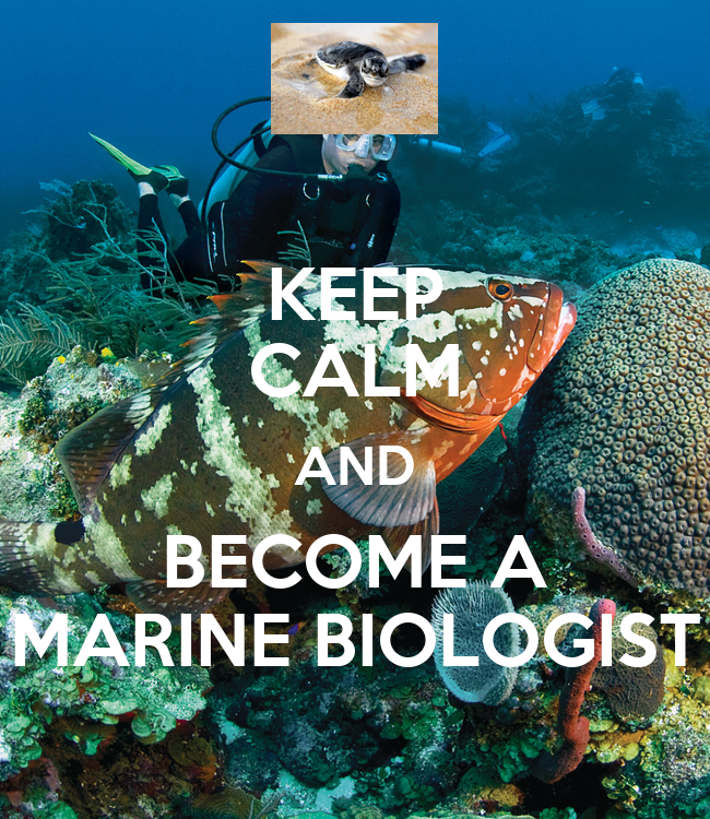 marine biology dissertation Maya puspita, who has a doctorate in marine biology, has joined the international my thesis in 180 seconds (mt180) competition in liege, belgium, on thursday.