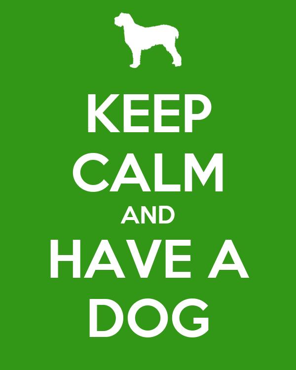 how to keep a dog