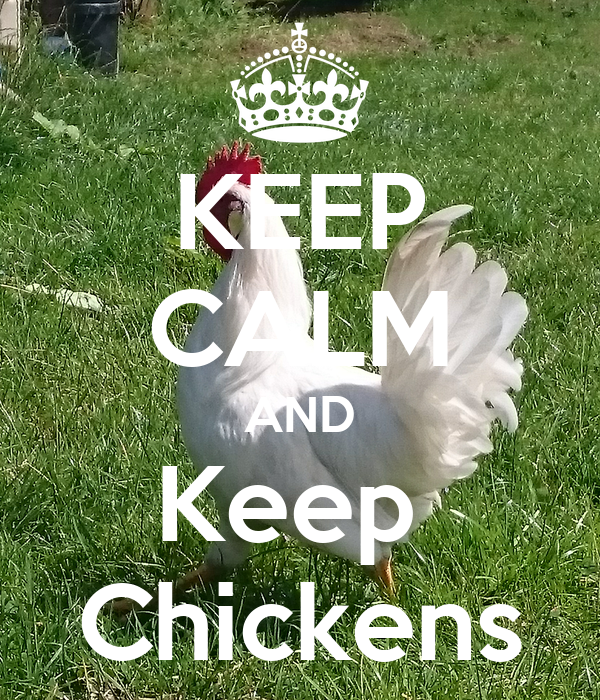 how to keep chickens quiet