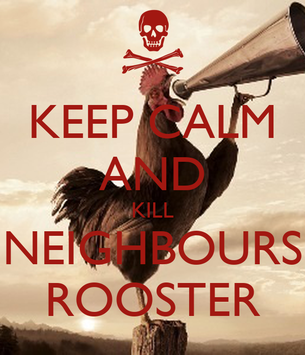 Rooster Kills Kill Neighbours Rooster
