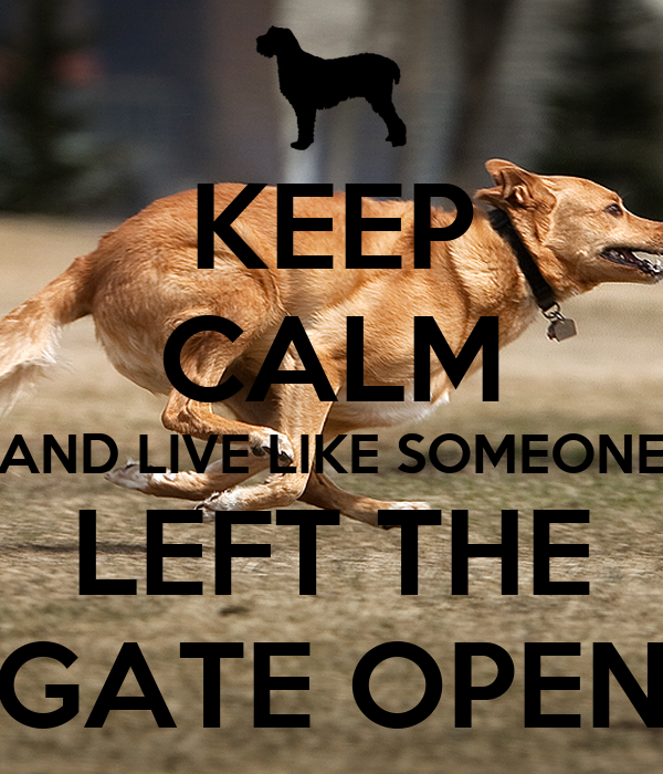 Live Like Someone Left The Gate Open Quote: KEEP CALM AND LIVE LIKE SOMEONE LEFT THE GATE OPEN Poster