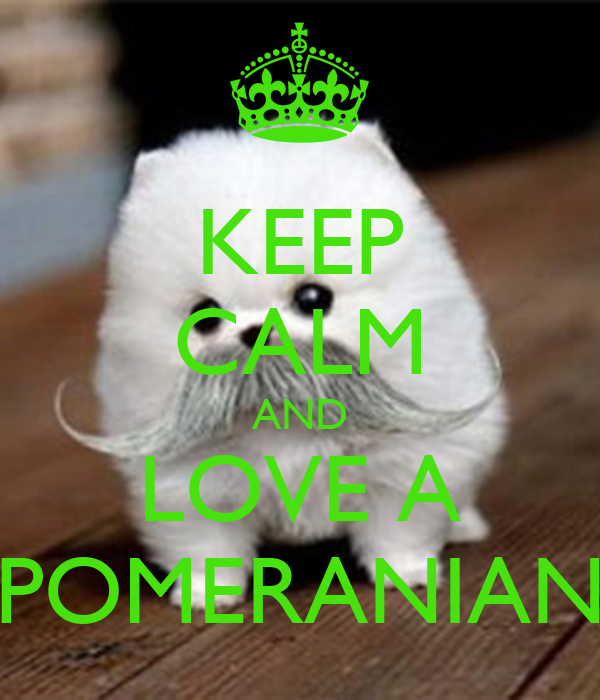 how to keep your pomeranian healthy