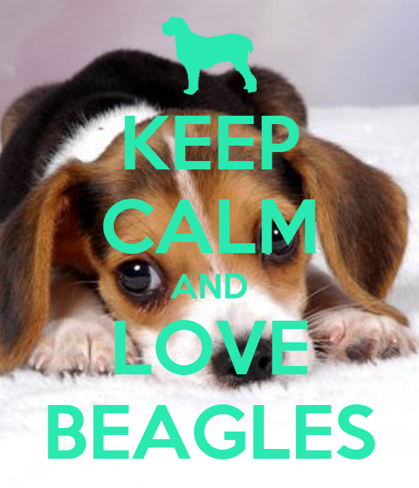 how to keep a beagle entertained