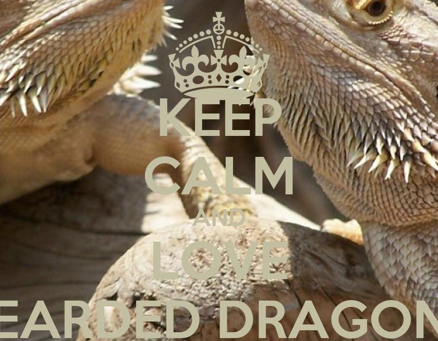 keep calm and love bearded dragons poster paul keep