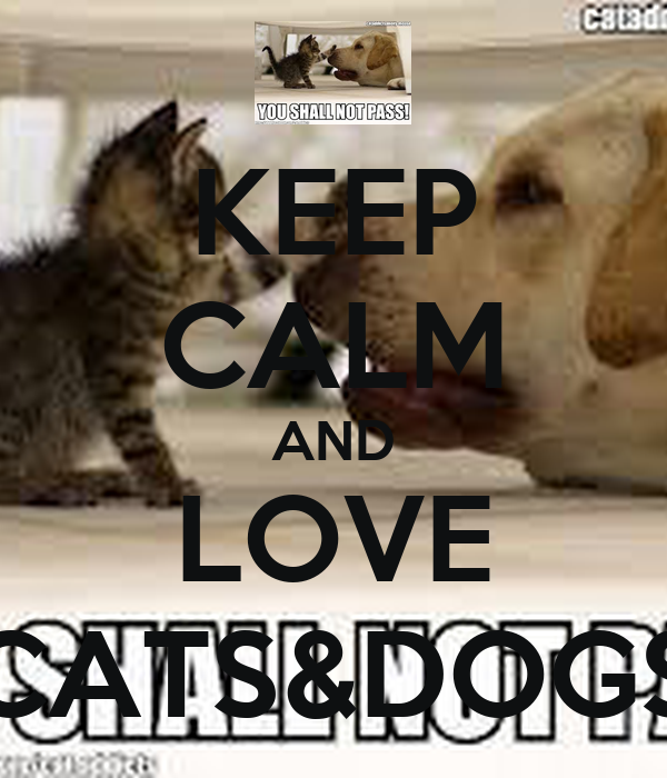Keep Calm And Love Cats Poster Keep Calm And Love Cats Amp Dogs
