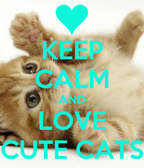 Keep Calm And Love Cats Poster Keep Calm And Love Cute Cats