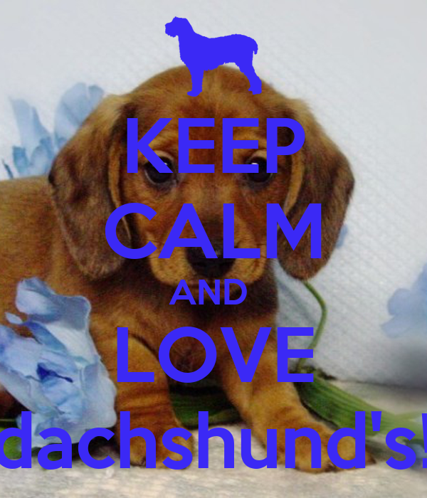 "/""Keep Calm and Love Dachshunds/"" Dog Keyring"