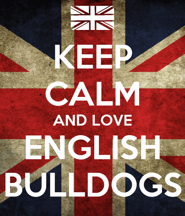 KEEP CALM AND LOVE ENGLISH BULLDOGS Poster   LILY   Keep ...