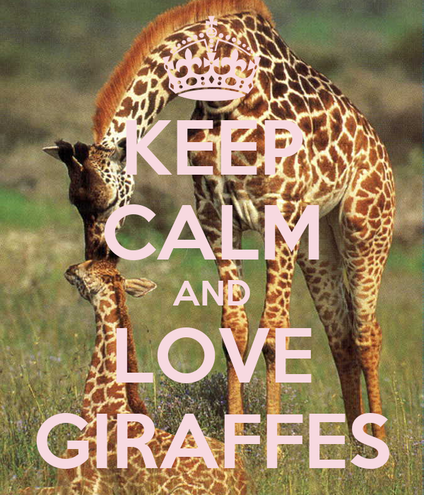 KEEP CALM AND LOVE GIRAFFES Poster - 700.5KB