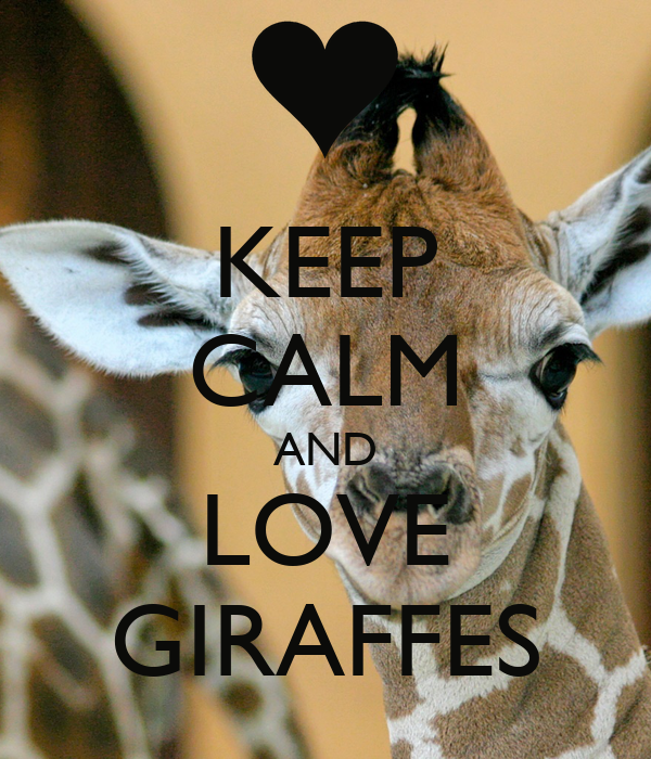 KEEP CALM AND LOVE GIRAFFES Poster - 651.4KB