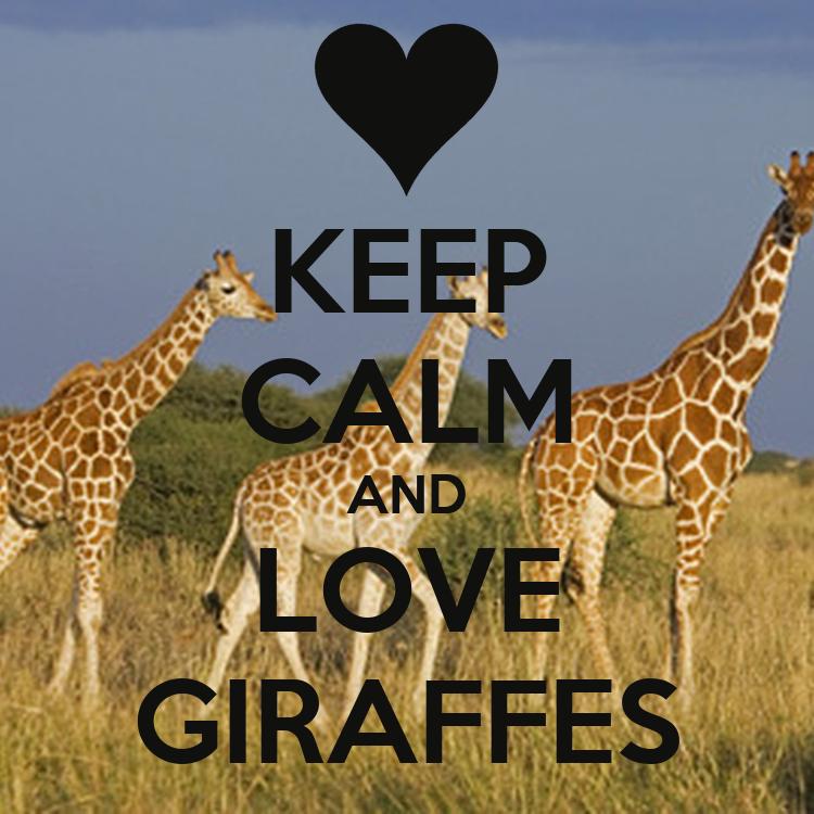 KEEP CALM AND LOVE GIRAFFES Poster - 539.3KB