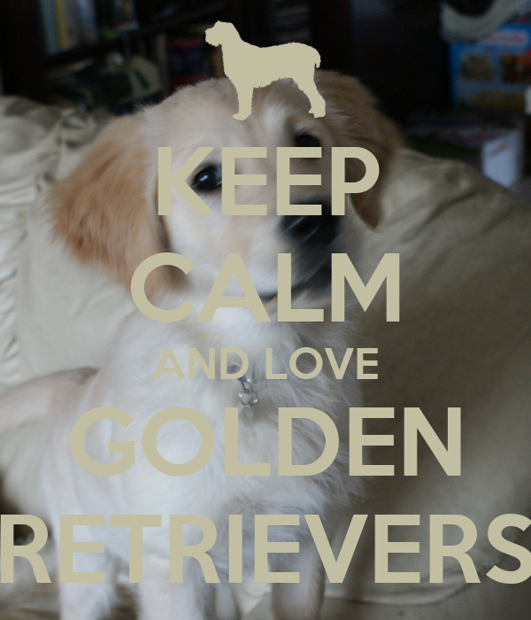 KEEP CALM AND LOVE GOLDEN RETRIEVERS Poster | KAYA | Keep ...