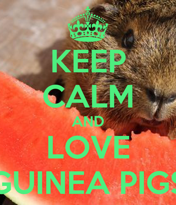 KEEP CALM AND LOVE GUINEA PIGS - KEEP CALM AND CARRY ON ...