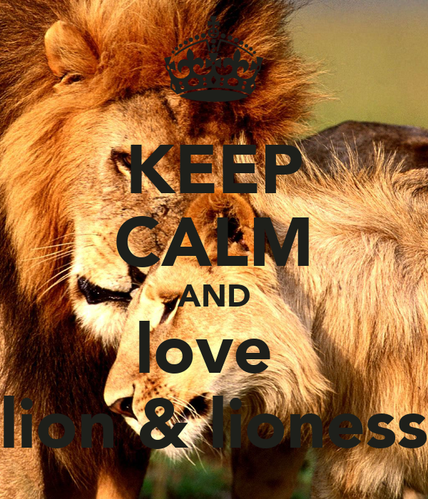 keep calm and love lion amp lioness poster zinat keep