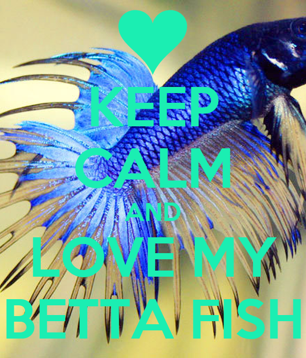 Keep Calm And Love My Betta Fish Poster Lucile Keep Calm O Matic