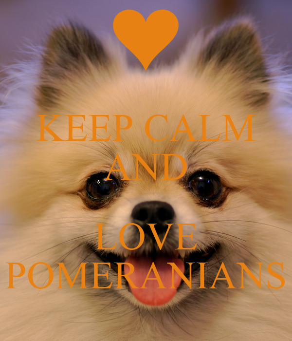 O Pomeranianach KEEP CALM AND LOVE POMERANIANS