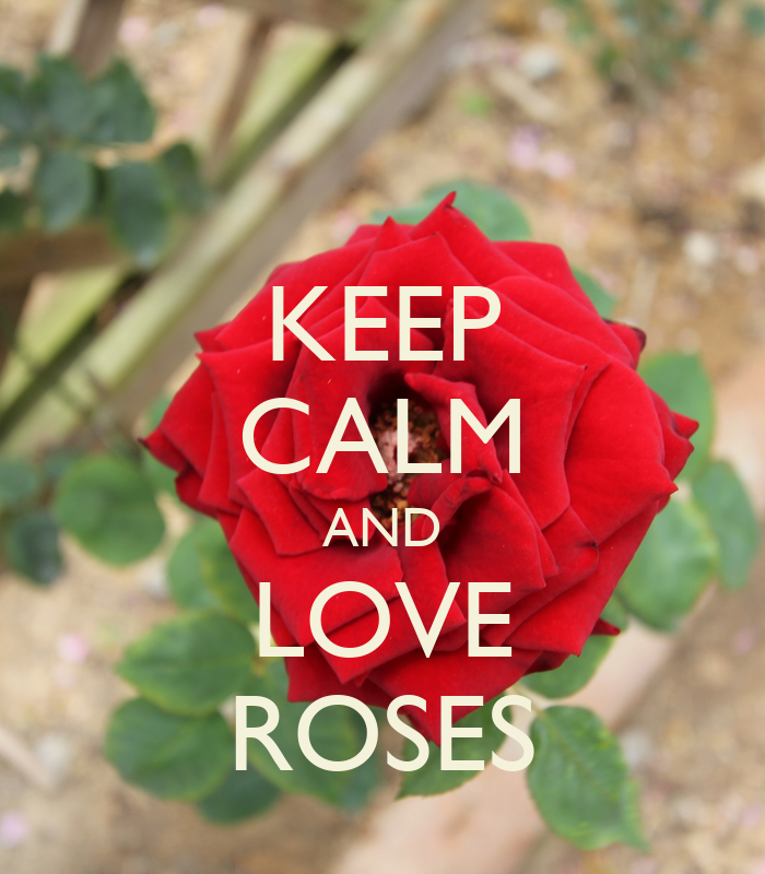 how to keep roses in the fridge