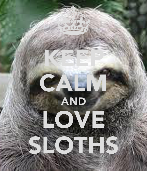 sloth wallpaper iphone