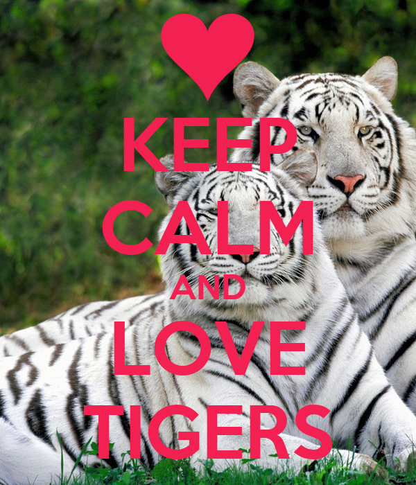 keep calm and love tigers keep calm and carry on image