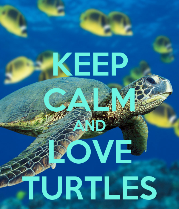 KEEP CALM AND LOVE TURTLES - KEEP CALM AND CARRY ON Image ...