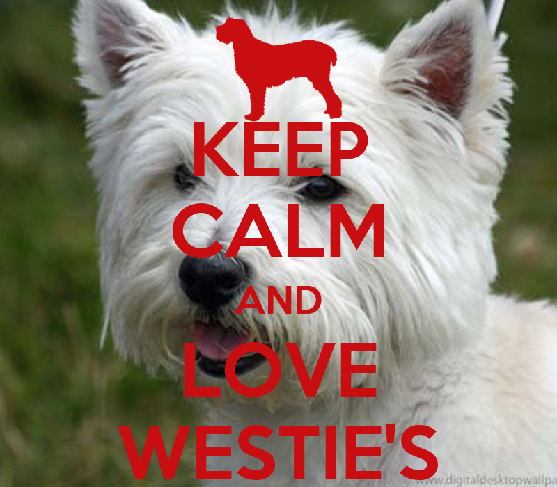 KEEP CALM AND LOVE WESTIE'S