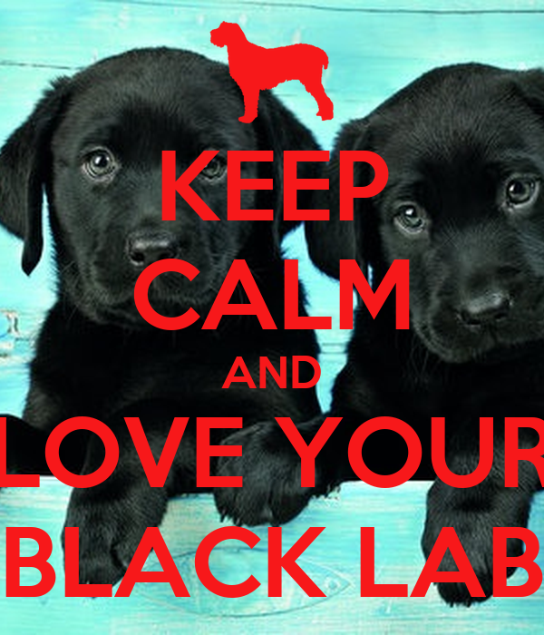 KEEP CALM AND LOVE YOUR BLACK LAB Poster