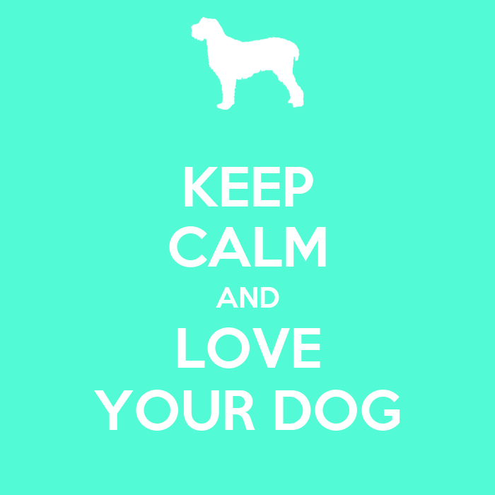 how to keep your dog calm