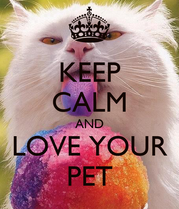 keep calm and love your pet poster mccoy keep calm o matic