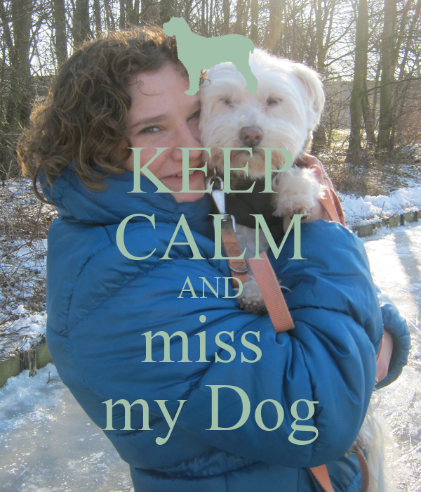 how to make my dog calm