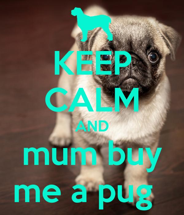 Buy Me: KEEP CALM AND Mum Buy Me A Pug Poster