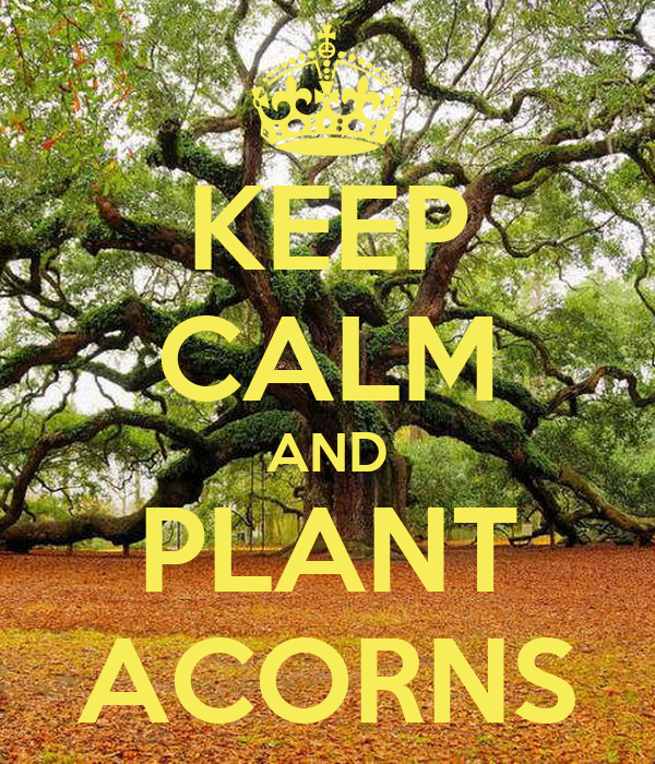 how to keep acorns fresh