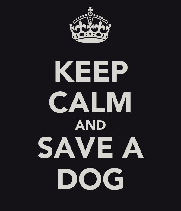 [Imagen: keep-calm-and-save-a-dog.png]