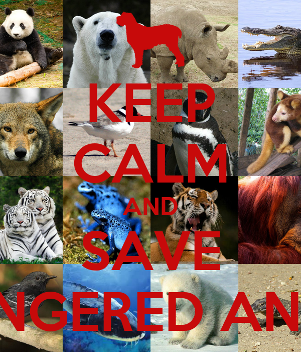 help save the endangered species of south america There are many ways in which people can help to keep these animals from becoming endangered or help save  central and south america,  endangered species.
