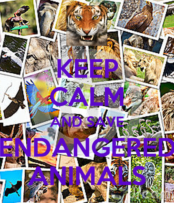 KEEP CALM AND SAVE ENDANGERED ANIMALS Poster